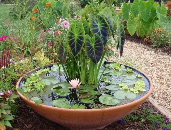 Водоем в саду не обязательно должен быть большим!