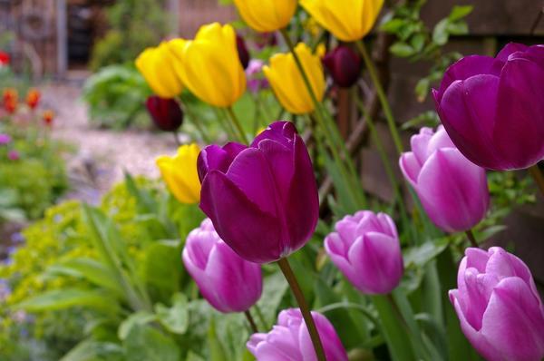 Уже совсем скоро яркие краски цветов преобразят наши сады