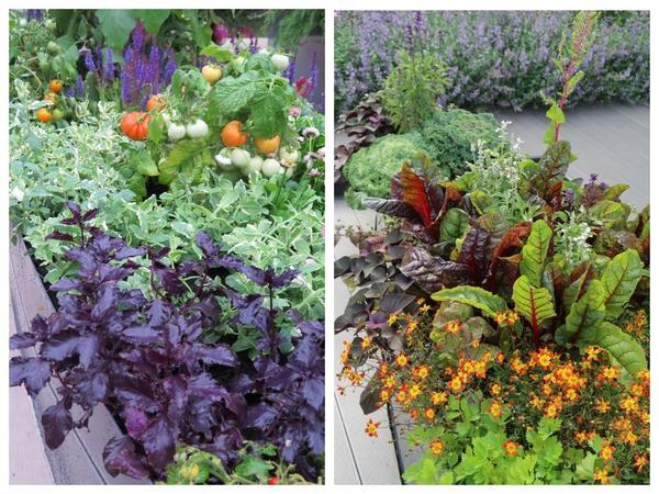Смело объединяйте в своих композициях овощные, зеленные и цветочные культуры