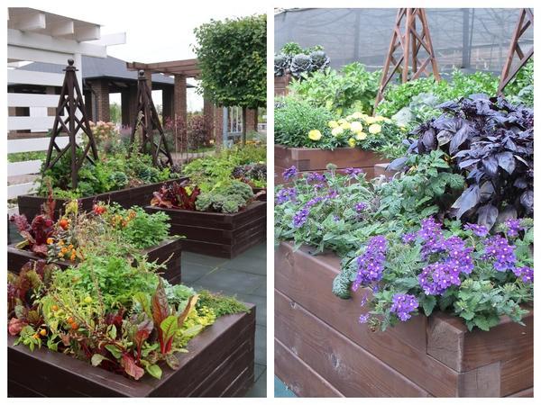 Декоративный огород - это возможность создавать красивые и полезные композиции