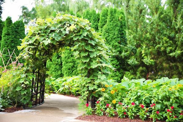 Элементы вертикального озеленения меняют ландшафт