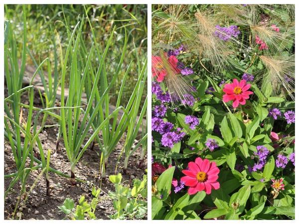 Огород или цветник: что требует больше времени и сил?