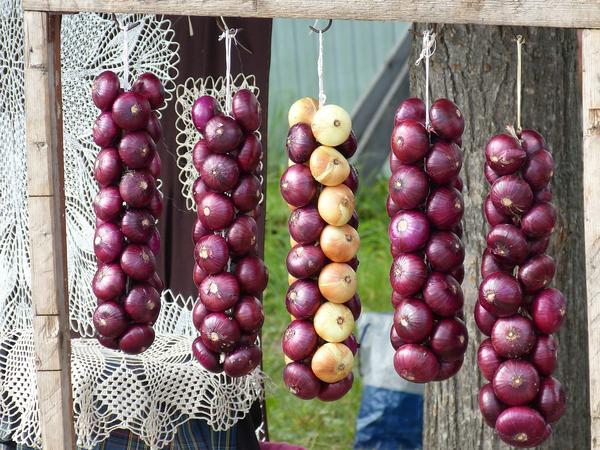 'Ред Барон' - популярный сорт красного салатного репчатого лука
