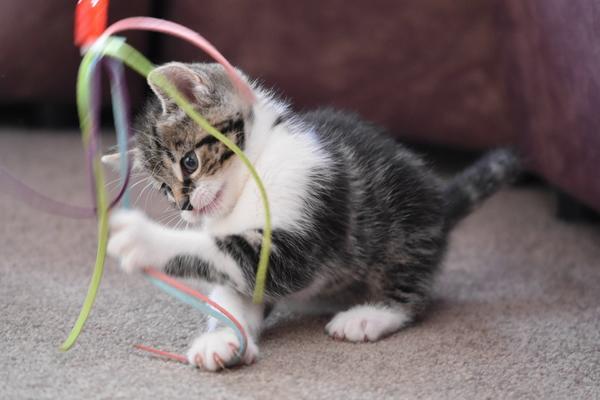 Ну как же кошачьему ребенку без игрушек!