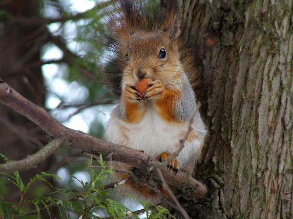 Белки знают толк в орехах