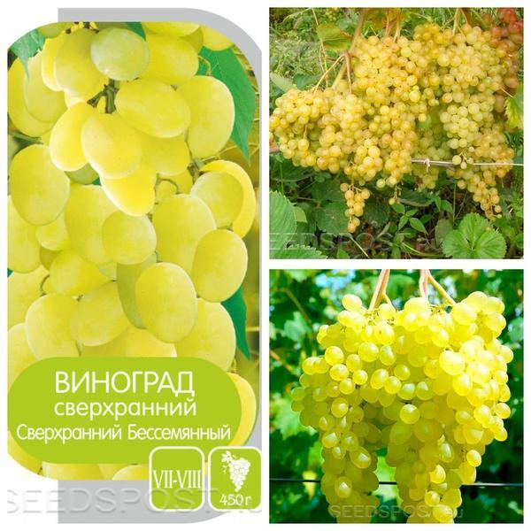 Виноград 'Сверхранний бессемянный', фото с сайта seedspost.ru