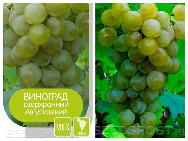 Виноград 'Августовский', фото с сайта seedspost.ru