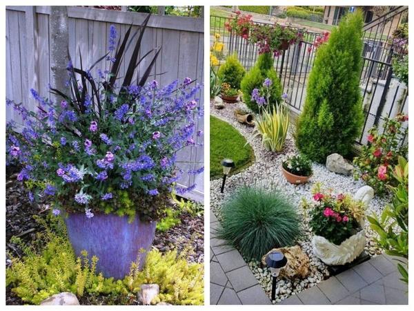 Растения в контейнерах могут быстро изменить облик цветника