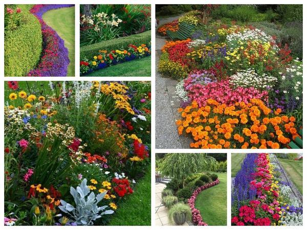 Яркие, обильно и долго цветущие однолетники - неплохой способ быстрого преображения цветника