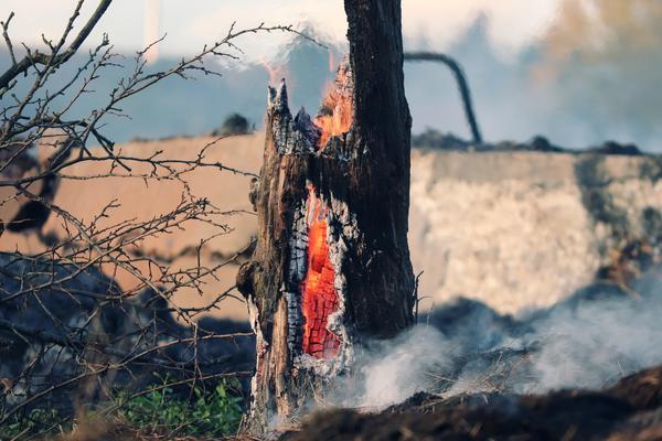 Каждый год весенний пал травы становится причиной страшных пожаров