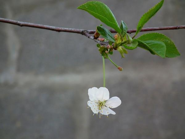Есть цветы, но нет плодов - неприятно, но объяснимо. А если даже цветов нет?