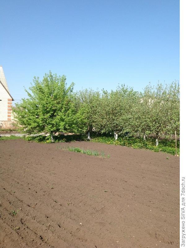 наш сад весной 2013 года