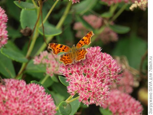 бабочки тоже радуются