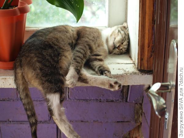 уставший от поиска еды