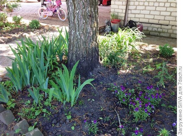 растения в соседстве с березой