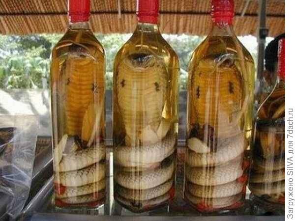 Китайское змеиное вино