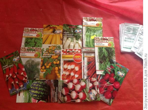 кустовые томаты сорта желтая жемчужина, семена