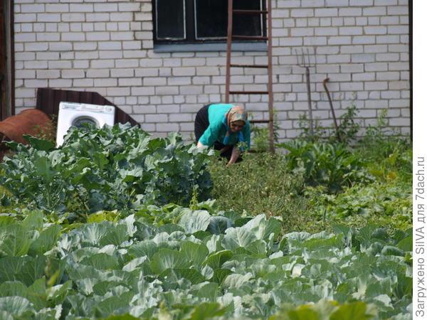 царство овощных грядок