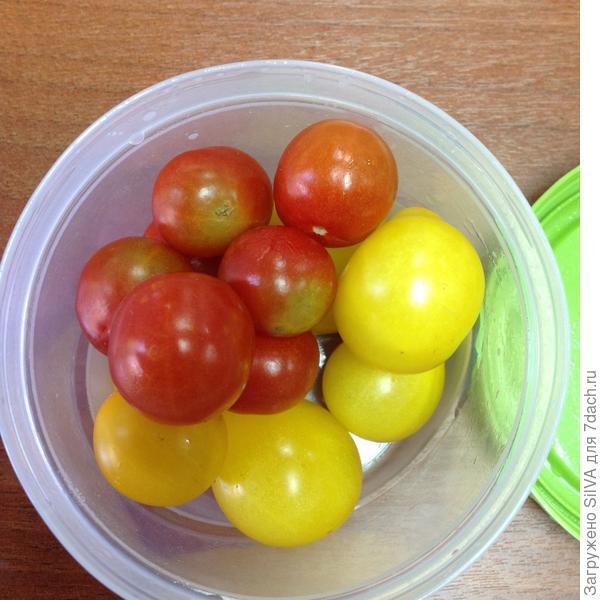 Такие разные помидоры с одного куста