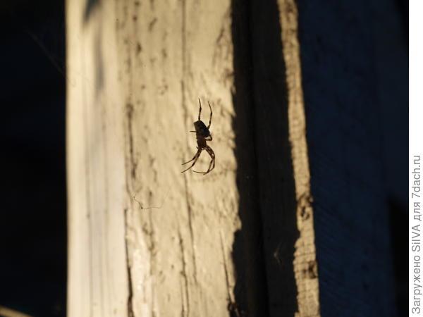 паучок на паутинке греется на солнышке