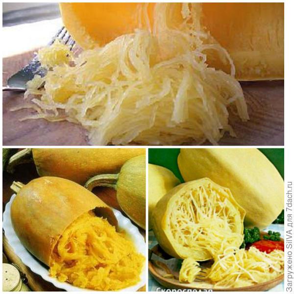 тыква спагетти или сквошь