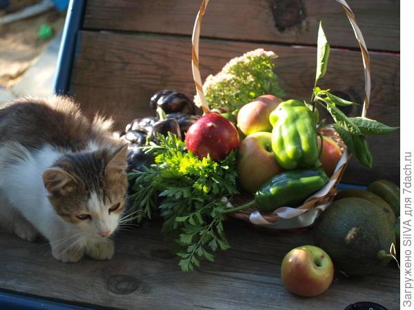 кот и урожай