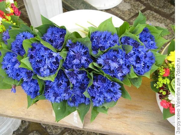 цветы11