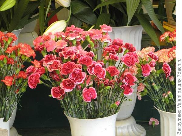 цветы16
