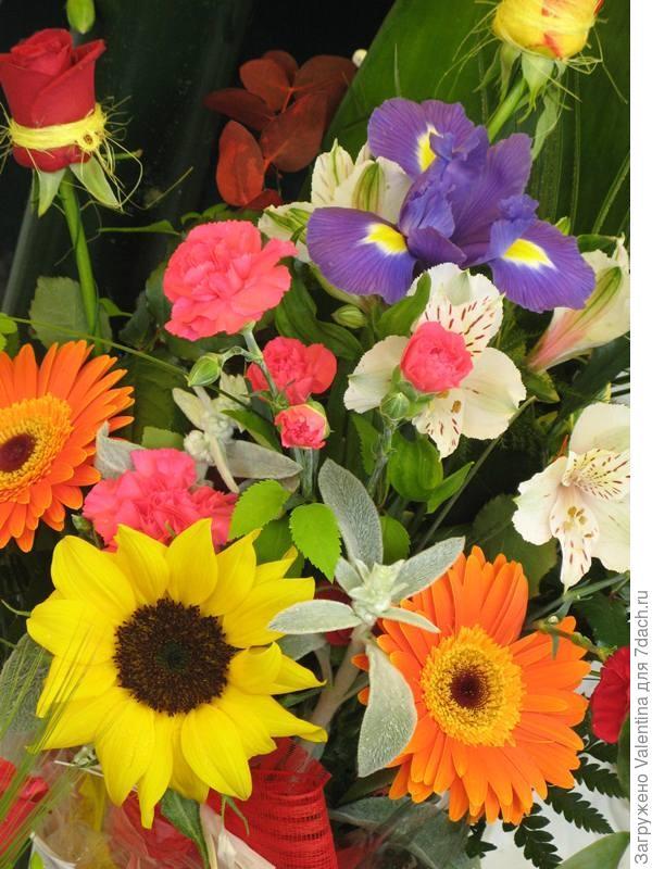 цветы13