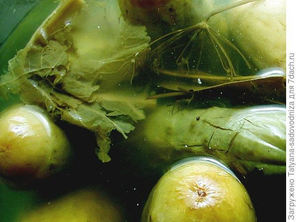 консервирование огурцов с хреном