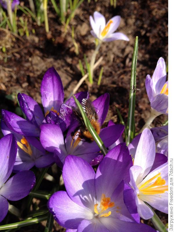 шмель почувствовал весну