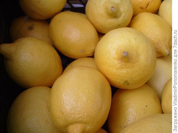 Целебные лимоны