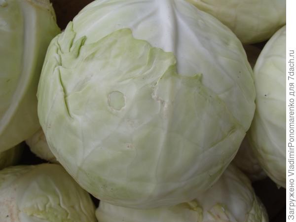 Капуста для салата
