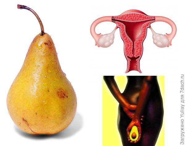 Груша, авокадо и матка.