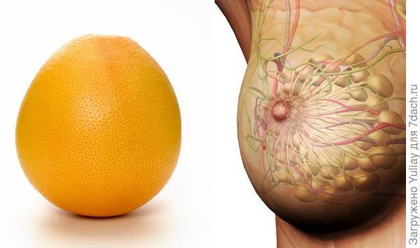 Апельсин и женская грудь