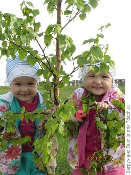 Пионы рядом,а бабочки в животе)))) а теперь уже эти бабочки превратились в красивых девочек))