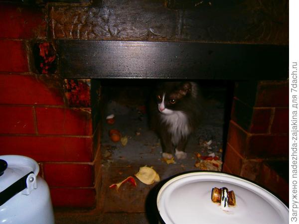 И коту Степану всегда интересно что приготовила на сегодня наша мама!!!