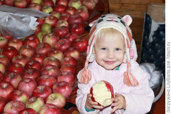 Яблочный вояж.