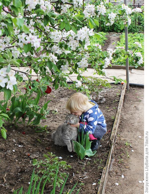 под цветущей яблоней