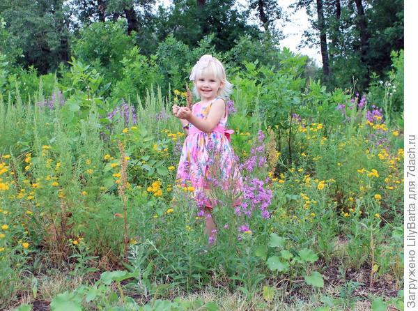 цветущие поля у ериков