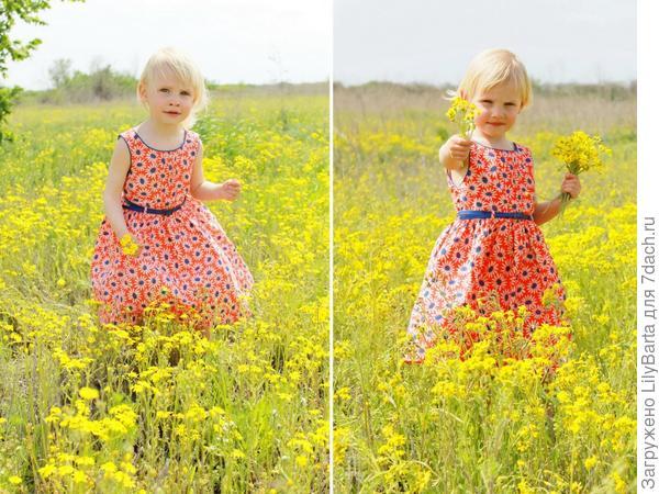 в полевых цветах весной