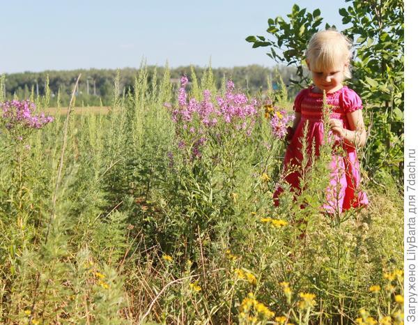поля вдоль ериков летом