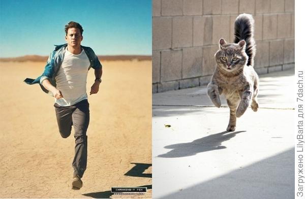 кот и..