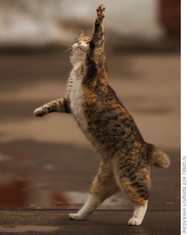 мартовский котик