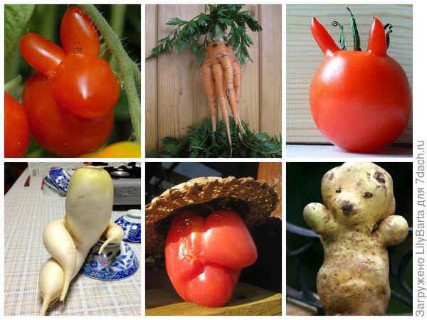смешные овощи и корнеплоды
