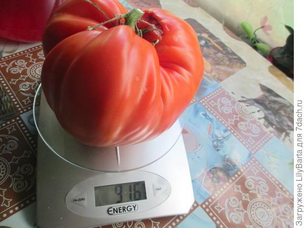 чудо - помидор