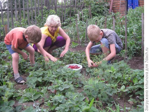 Любим мы клубнику кушать,жаль она не целый год! Ждем поэтому всю зиму, когда лето  к нам придет!