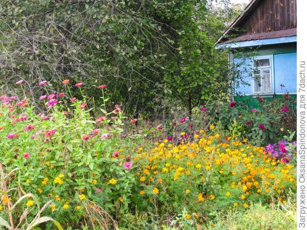 Огородное счастье!