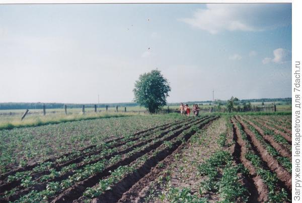 окучивание огорода