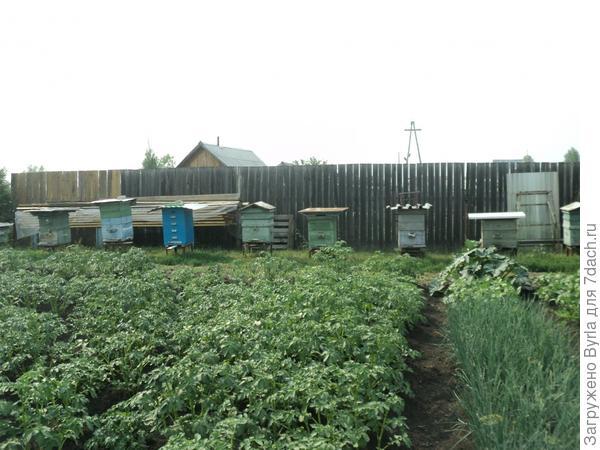 Пчелы подняли тревогу увидали бочку меда!